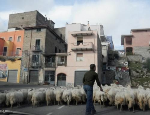 Macomer, l'ex istituto Agrario diventa la scuola dei pastori
